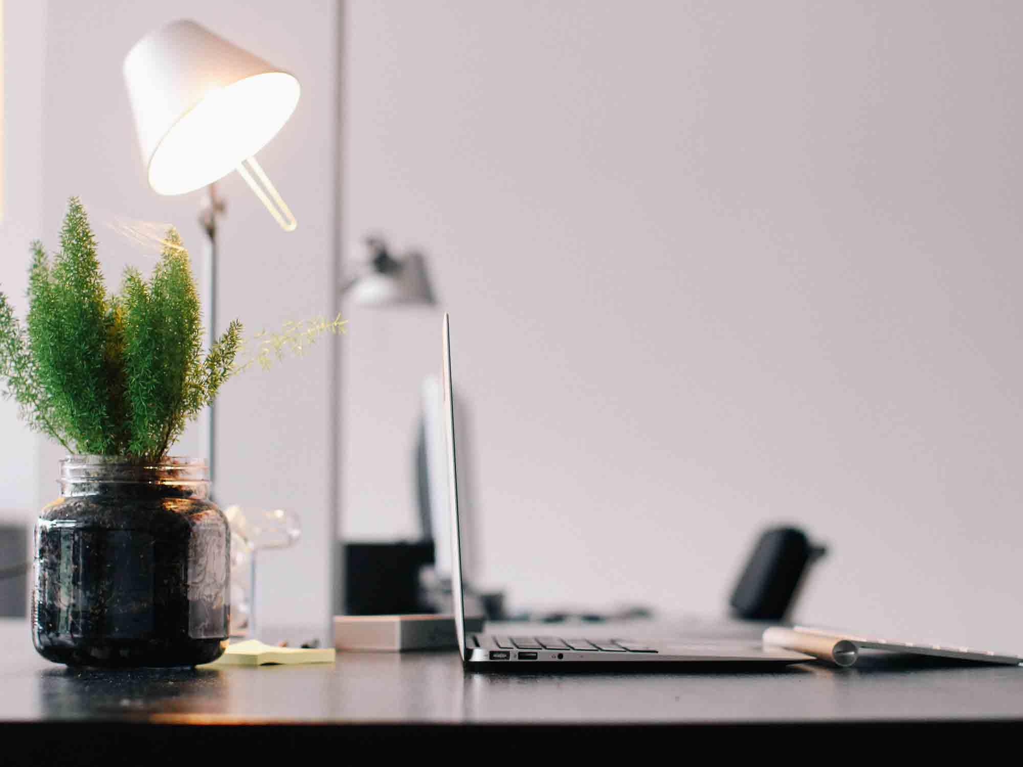 Pflanze_am_Arbeitsplatz