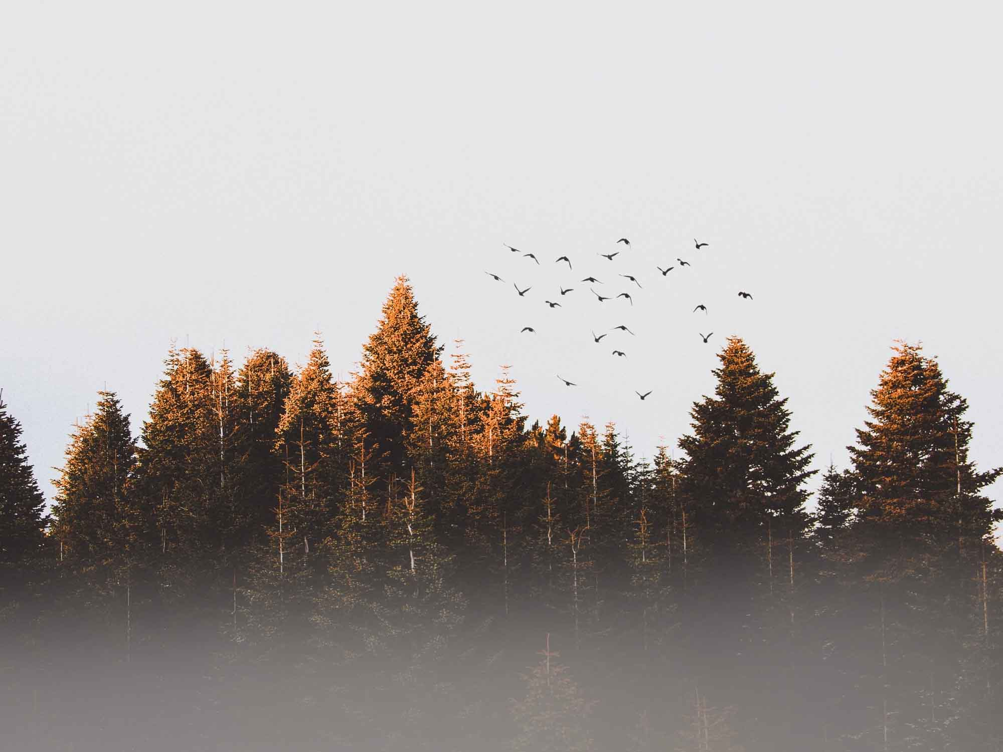 Inspiration_Natur_Styling_ideen_Wald_Vogelschwarm_am_Himmel