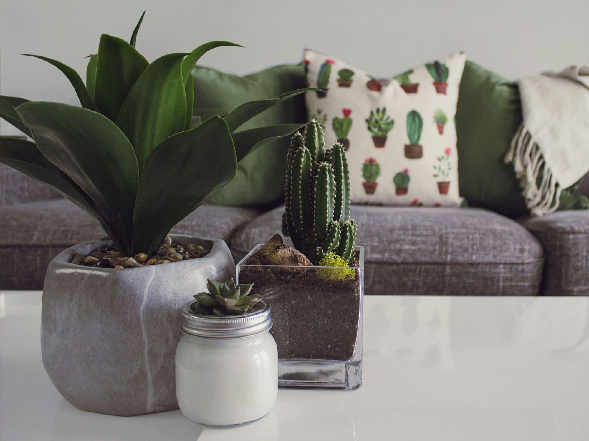 Luxuriöses_Design_exklusive_Farben_Materialien_Kaktee